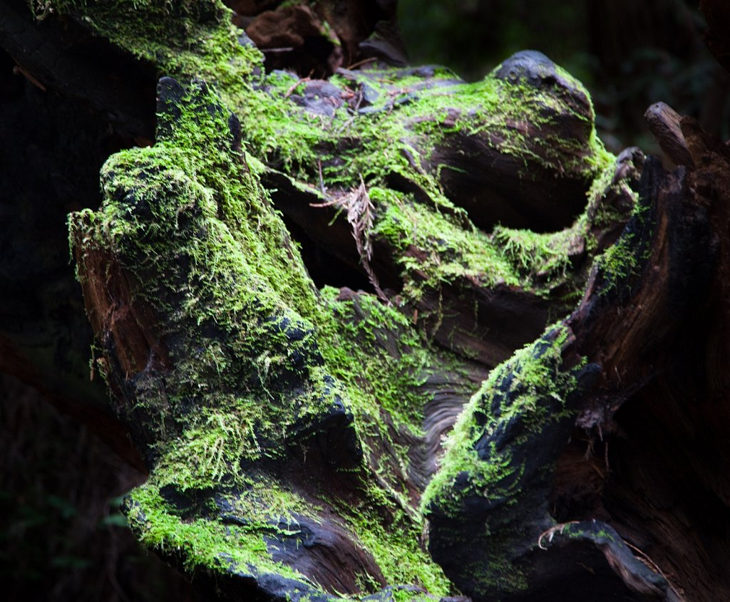 Very Mossy Gnarly Wood