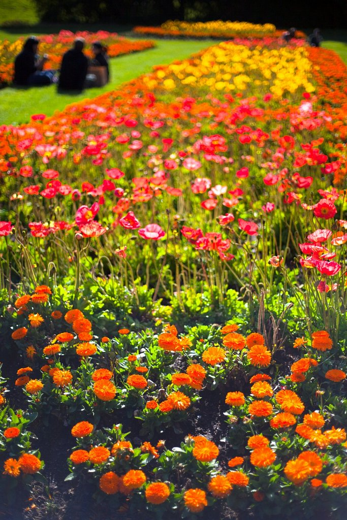 A group sits in the flower gardens in Golden Gate Park
